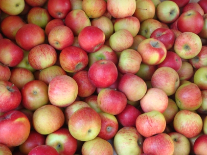 Apples - m