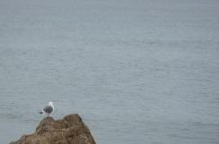 Gull and Ocean - m