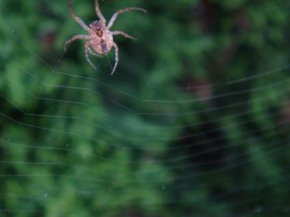 Making A Web - 2 - m
