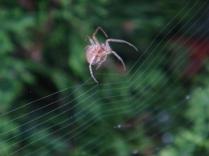 Making a Web - 3 - m