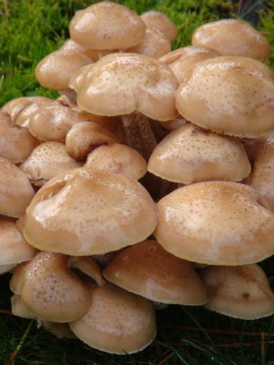 Mushrooms - m