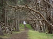 path under trees - d33 - m