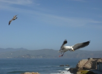 Seagulls - m