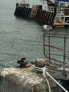 Bird at a dock apparatus at the San Francisco Ferry