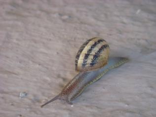 Snail - m