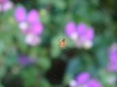 Spider - Tiny - m