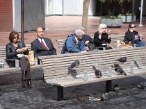 The People and The Pigeons - m