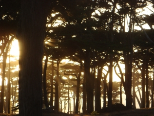 Trees Near Sunset - m