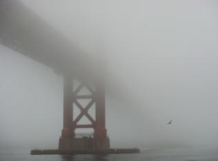 Under GGB in Heavy Fog - with Bird - m