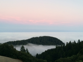 View from Mt Tam 8-2-2014