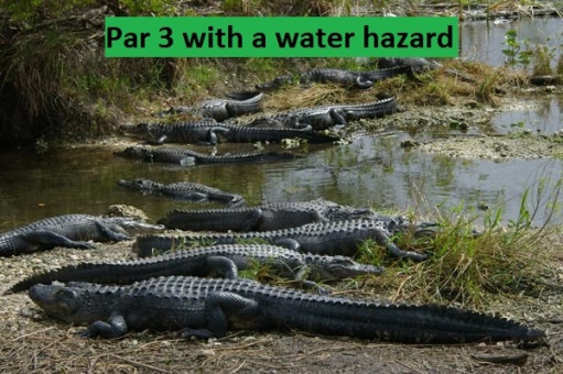 Par 3 - Alligators